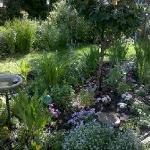 Lani's Garden