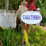 The Camel greets you at Casa Thorn