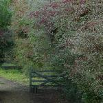 GARDEN & GATE