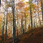 Uholka is part of the largest virgin beech forest in Europe (Ukraine)