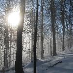 winter sun in Svydovets primeval forest (Ukraine)