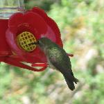 One of the many, I especially love the ruby-throated ones!