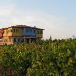 Wineyard and hotel