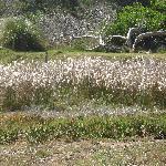 Vegetación silvestre.