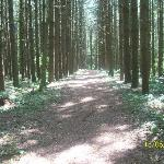 part of the beautiful walking trail
