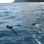 Dolphins! Thanks Captain Gary!