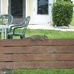 Even the squirrel is relaxed at Ferndale!