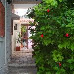 Nibardo's garden