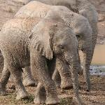 baby elephants at Shamwari