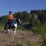 Promenade à cheval dans les bruyères du Parc naturel régional de Millevaches en Limousin