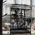 Monty the parrot