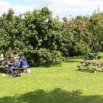The fantastic garden