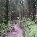 misty trail