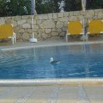 Even the seagulls enjoy the pool.