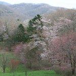 隠れた桜の名所です