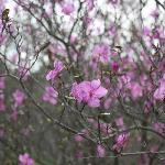 ツツジも綺麗に咲いてました。