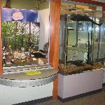 Aquarium and wildlife display.