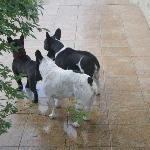 Mi perro con sus amigos