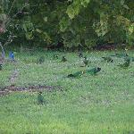 Parrots in the grounds