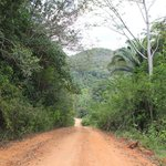 Road through Mountain Pine Ridge