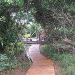 Pathway to lapa