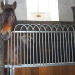 Very friendly horses