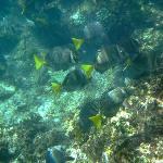 snorkeling at Punta Pescadora