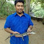 With The Baby Croc ...