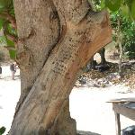 Hideous graffiti on living tree at heart of beach by tourists - they should be ashamed!!!!