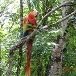 Wild macaws outside the ruins complex