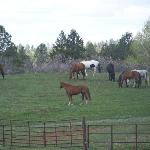 Some of the Horses here at Echo Basin Ranch