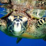 snorkling sisters islands