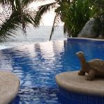 the infinity pool near the outside dining area, near the spa