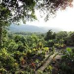 the top tree house has a view of the volcano on one side and of this beautiful garden on the oth