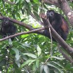 monkeys nearby