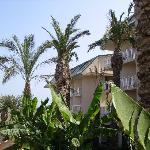 Bananenstauden, Palmen und das Hotel