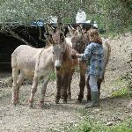Beatrice with the donkeys
