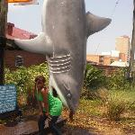 Sharky's Restaurant