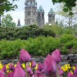 Parliament and the tulips during the festival