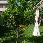 Gorgios Garden