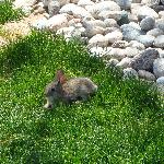 One of the locals :)