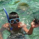 So that's how you hold a sea urchin!