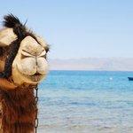 sharm elnaga significa baia dei cammelli