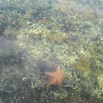 Starfish seen from the boat