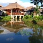 The lily pond villas