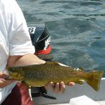 Nice Brown Trout