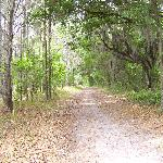 Covered area of the trail