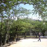 桜の樹の向こうに博物館が見えます