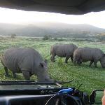 Bei den Rhinos