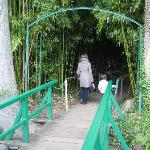 Seerosengarten Bambuswald